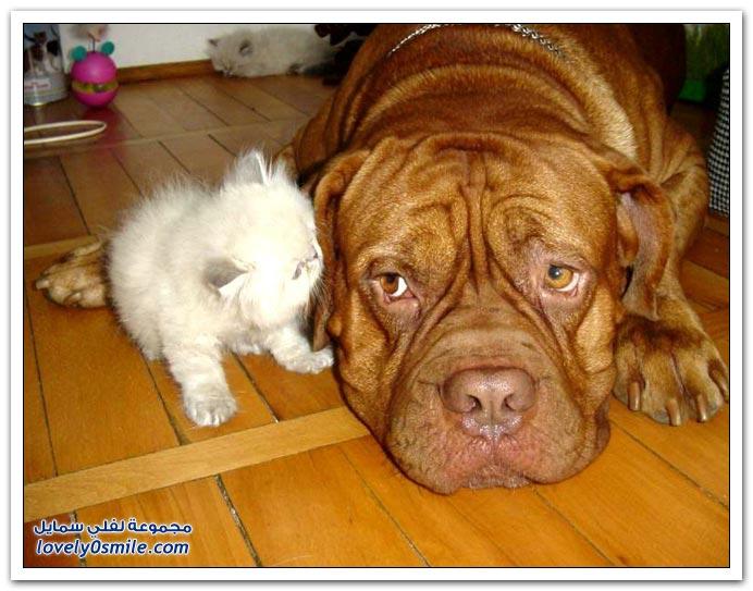 صور صداقة الكلب والقط