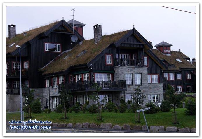 صور زراعة أسقف المنازل في النرويج