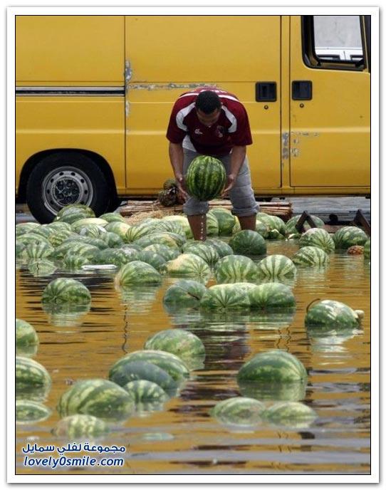 البطيخ في البرازيل أثناء الفيضانات