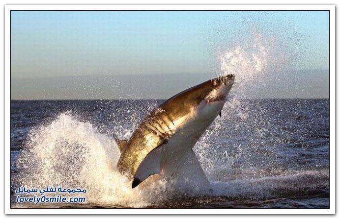صور أسماك القرش على ساحل مدينة كيب تاون في جنوب أفريقيا