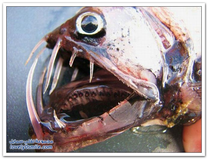 صور أسماك نادرة