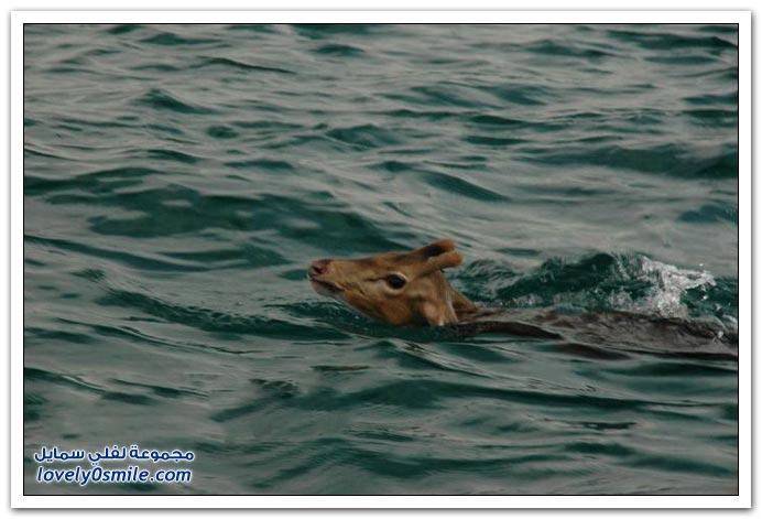 إنقاذ غزال