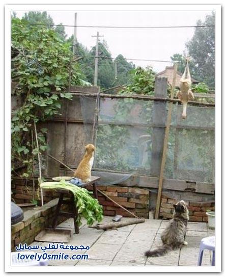 القط الجائع