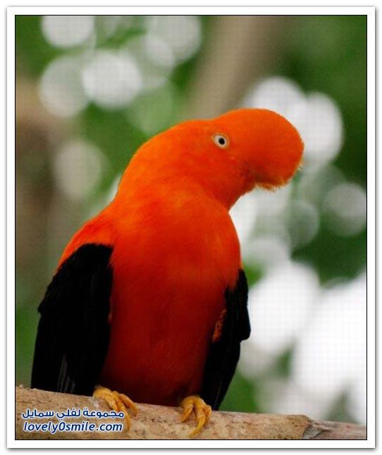 حيوانات وطيور وأسماك وحشرات ذات لون برتقالي