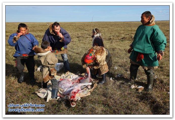 صور من حياة الرعاة في سيبيريا