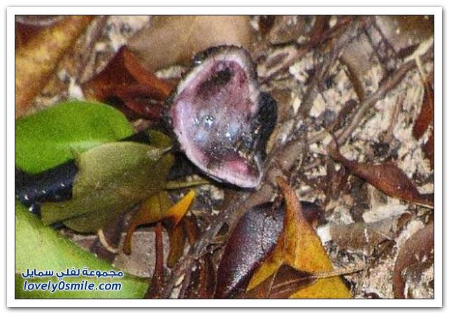 صور الضفدع والهروب من بلع الثعبان