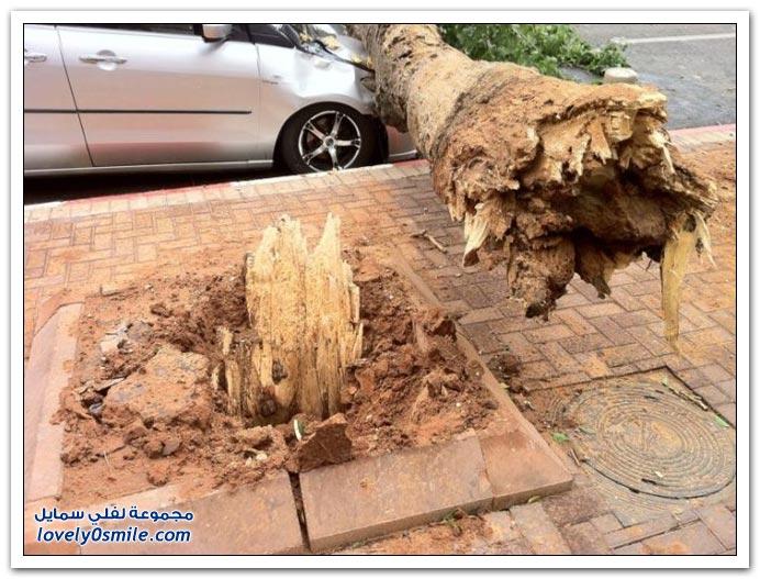 صور: لحد يوقف جنب أي شجرة