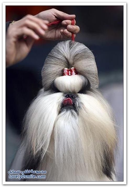 صور أنواع وأشكال الكلاب ودلعها