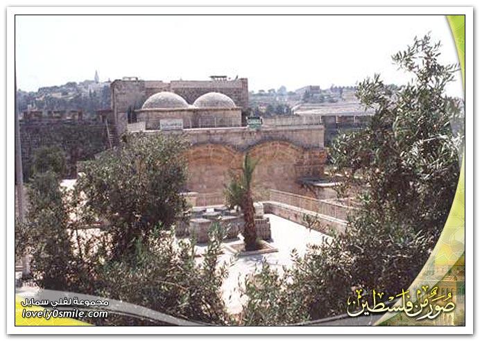 صور من فلسطين 8