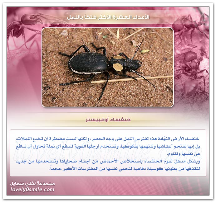 الأعداء العشرة الأكثر فتكاً بالنمل