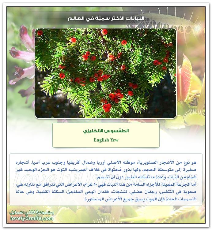 النباتات الأكثر سمية في العالم