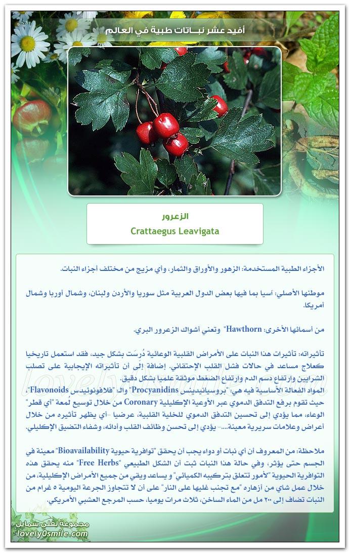 أفيد عشر نباتات طبية في العالم