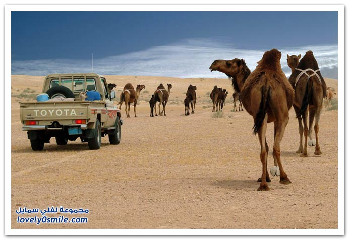 المملكة العربية السعودية معلومات وصور ج1