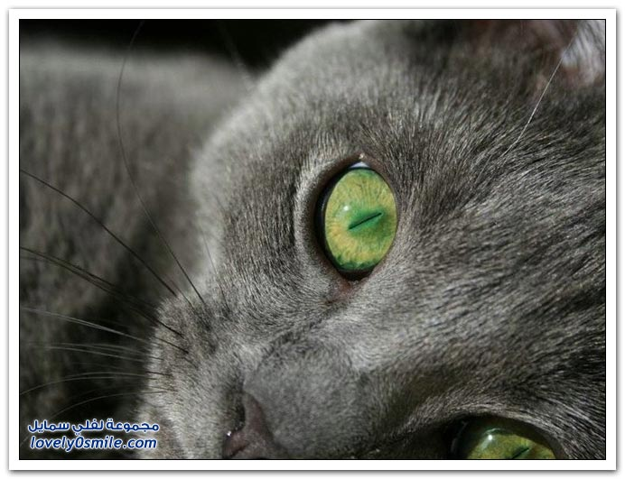 صور قطط ج5