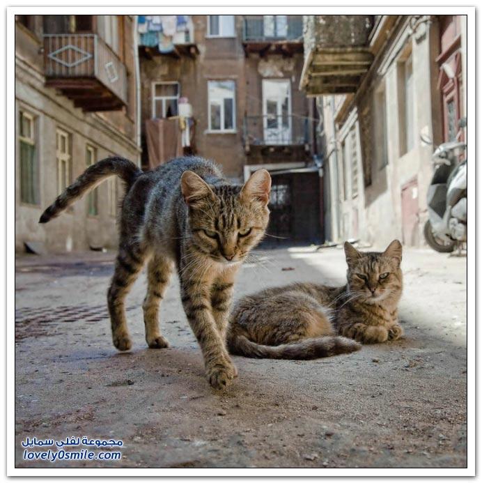 صور قطط ج6