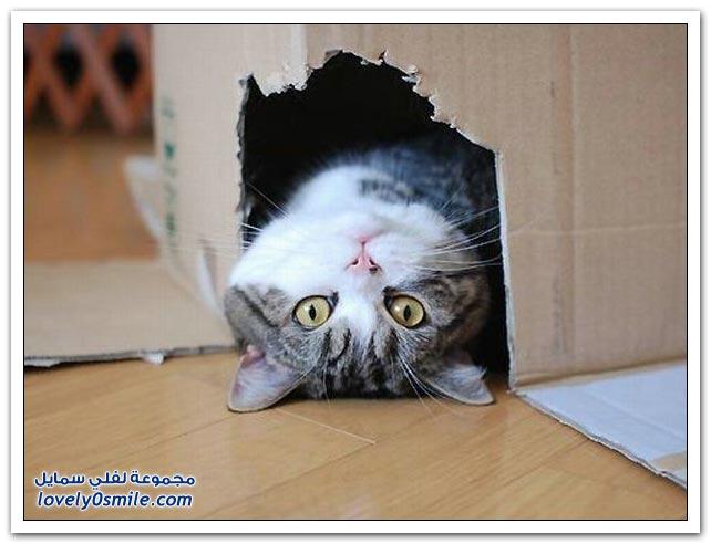 صور قطط ج7