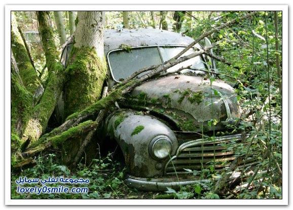 غابات مقبرة السيارات