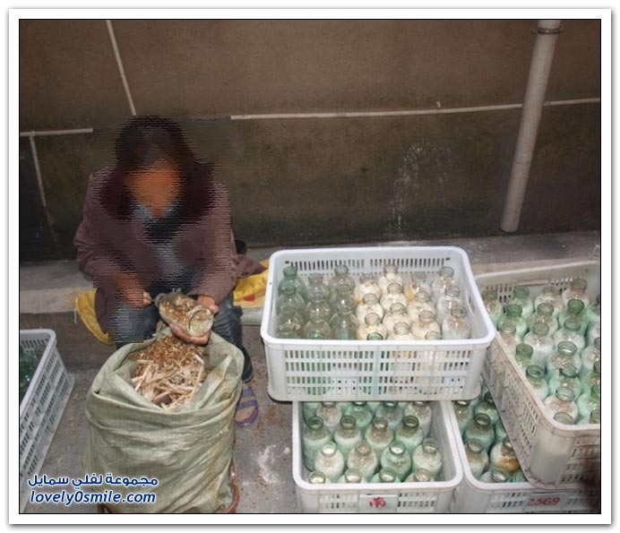 صور الفطر في الصين