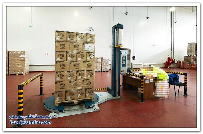 مصنع بطاطس ( شبس ) في روسيا
