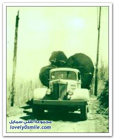 صور لقطع الأشجار الضخمة في الماضي