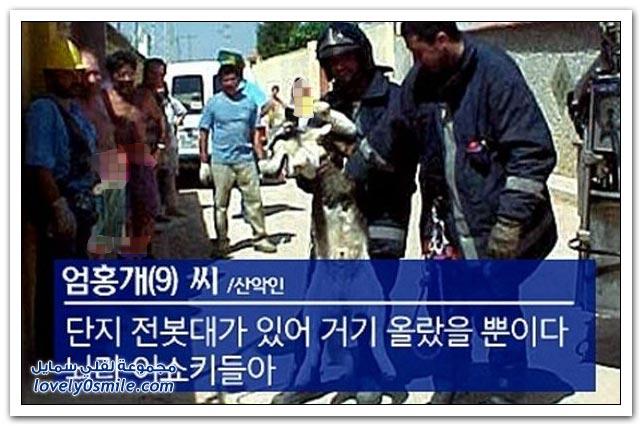 عملية إنقاذ كلب من فوق عمود كهرباء
