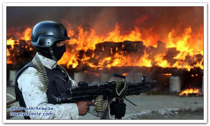 حرق 134 طن من الماريجوانا في المكسيك