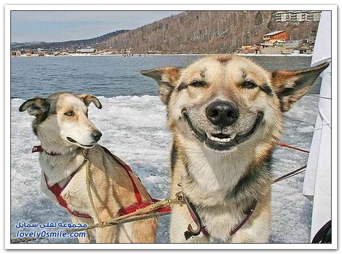 ابتسامات