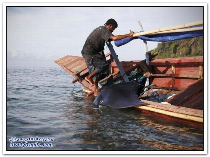 صيد الحيتان وأسماك القرش في إندونيسيا
