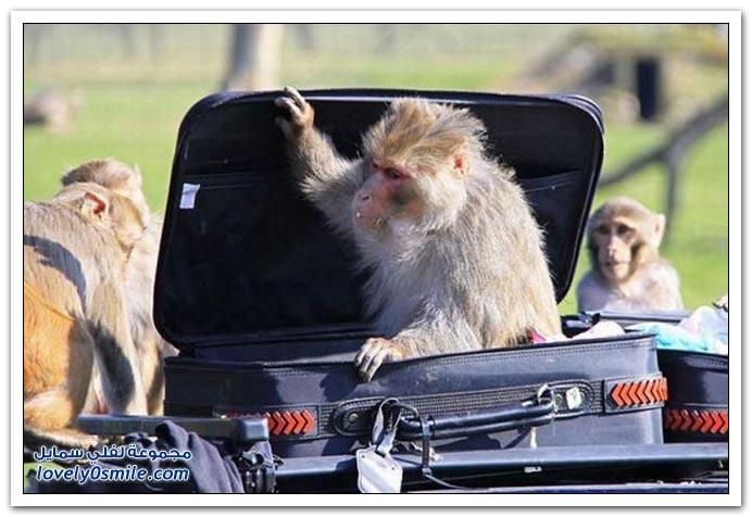 هجوم القرود 1