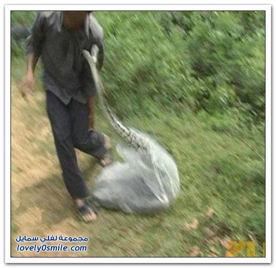 صياد ثعابين يتعرض للهجوم من ثعبان