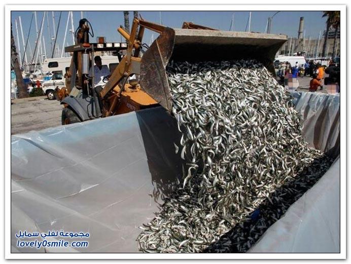 موت آلاف من الأسماك في ميناء كاليفورنيا