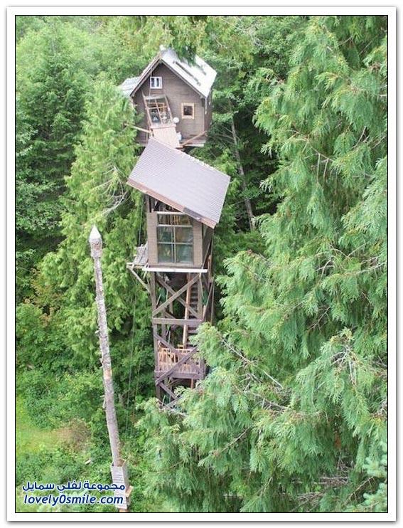 منازل على قمم الأشجار