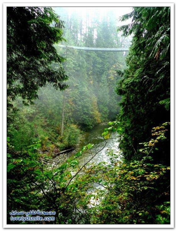 جسور الغابات