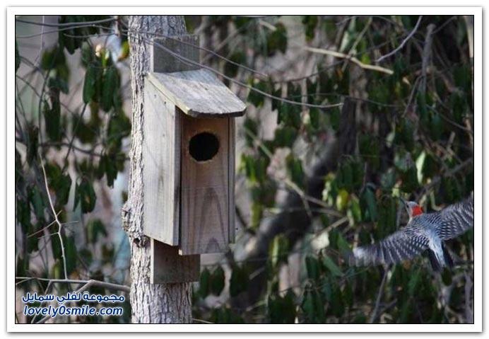 احتلال بيت طائر