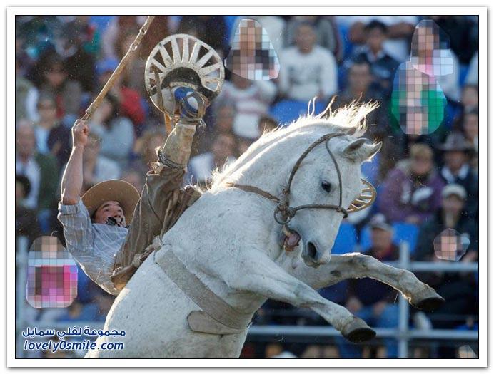 رياضة ركوب الخيول غير مروضه