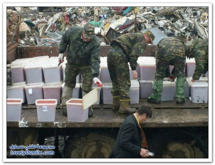 تدمير الكافيار الأحمر المهرب في روسيا