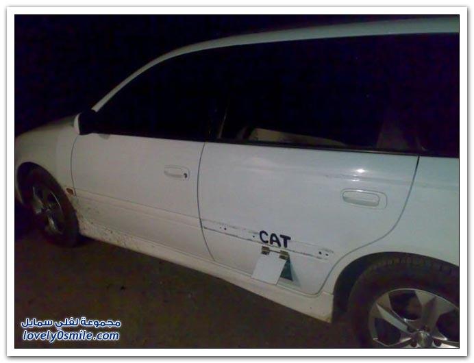 حتى القط صار له باب في السيارة