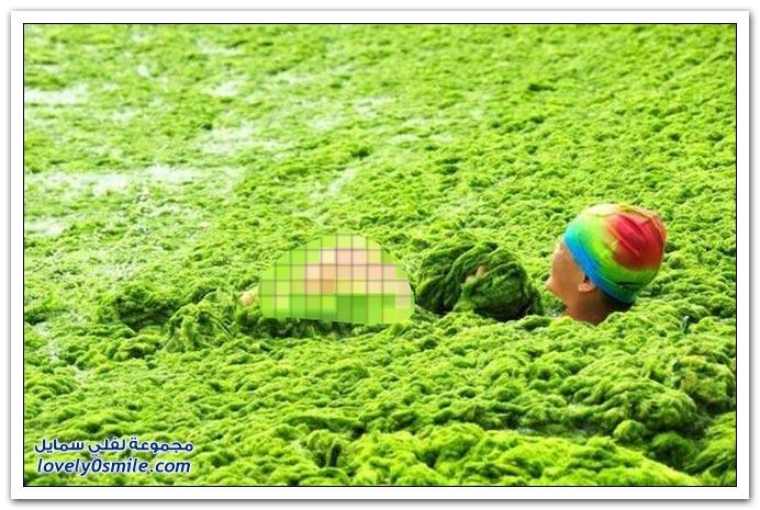 شاطئ الطحالب في الصين