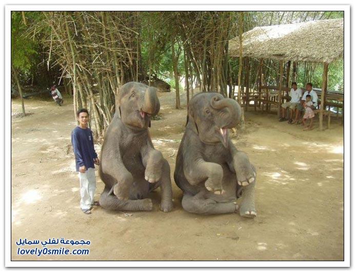 صور من عالم الحيوان الفيل ج4