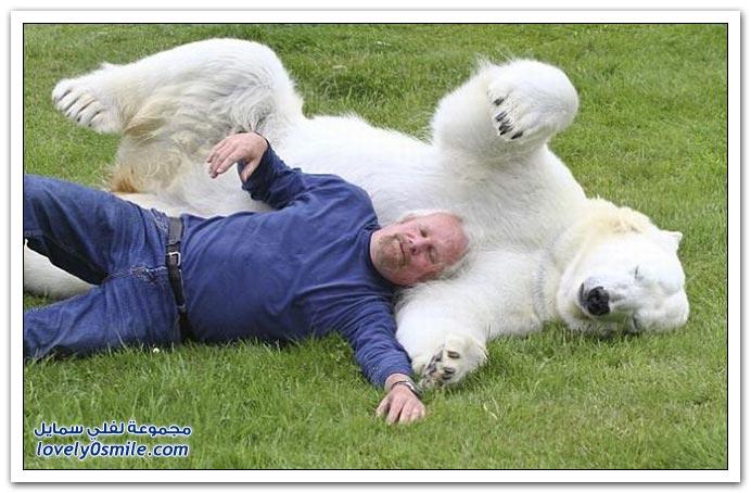 صديق الدب القطبي