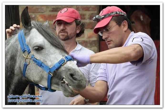 تنظيف أسنان الحصان