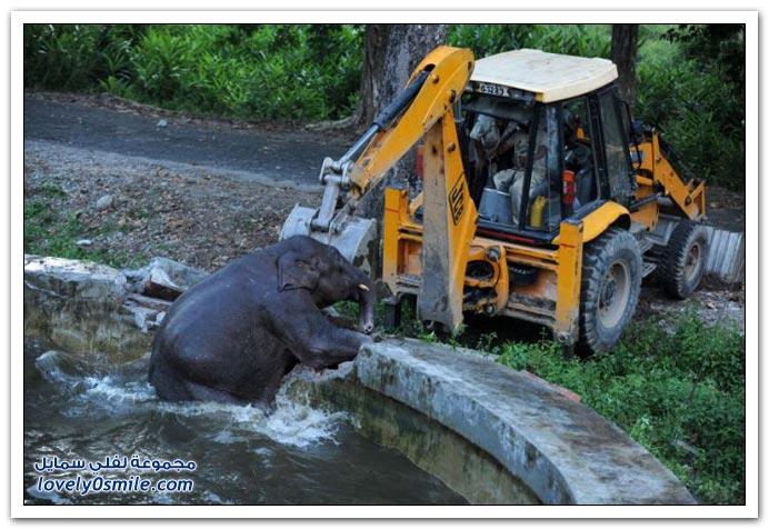 إنقاذ فيل