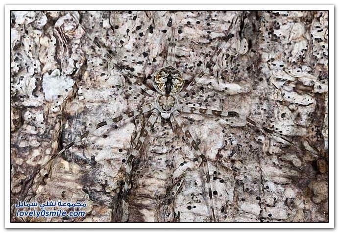 طرق التمويه عند بعض الزواحف والحشرات