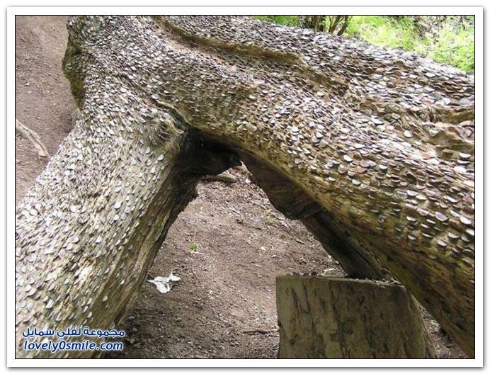 زرع الفلوس !! شجرة المال في بريطانيا Money-tree-in-Britai