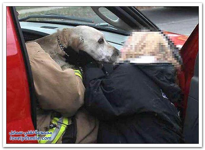 قبلة الحياة يقوم بها رجل إطفاء لكلب