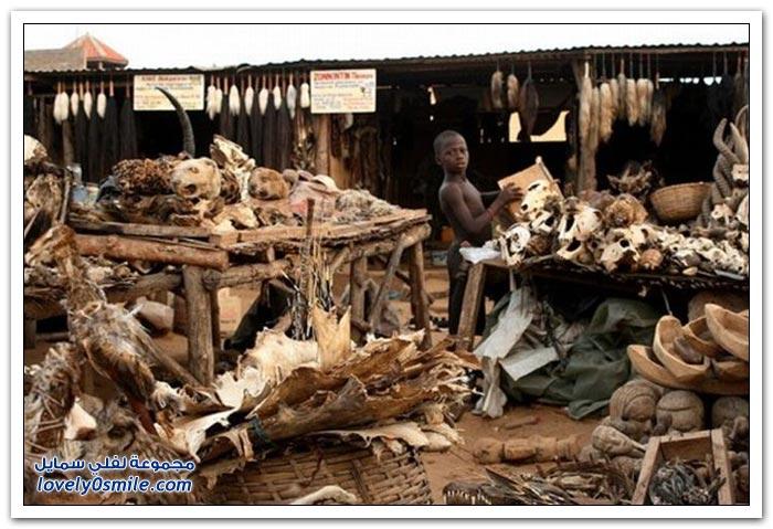 فيديو وصور: سوق السحرة والمشعوذين في توغو