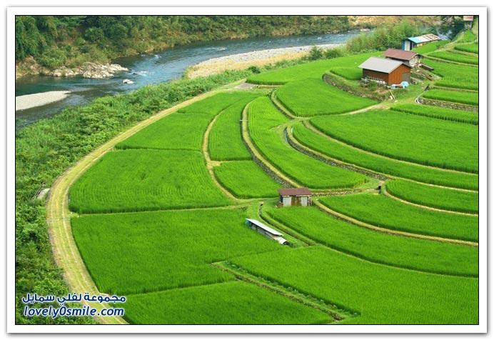 صور لمدرجات مزارع الأرز في شرق آسيا