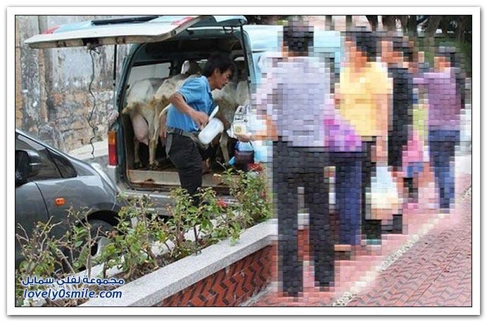 الحليب يوصلك لحد باب بيتك في الصين!؟