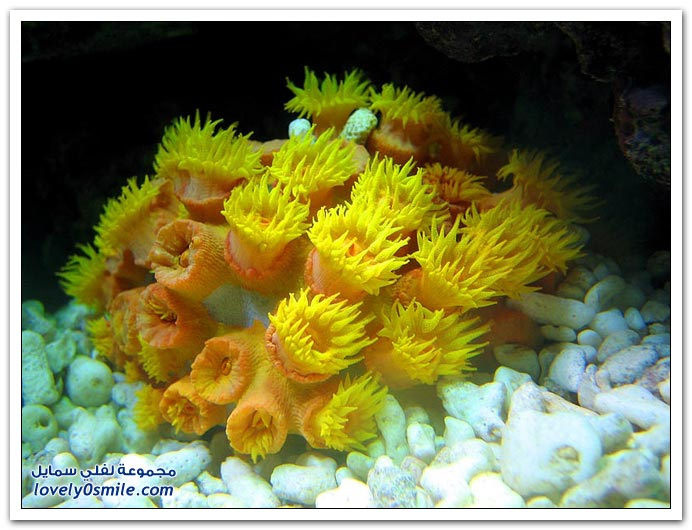 الكائنات الحية في أعماق البحار ج1