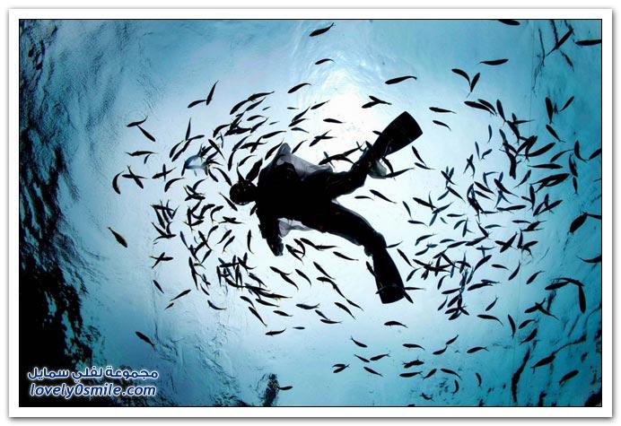 الكائنات الحية في أعماق البحار ج2